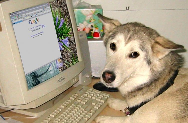 Na internet, ninguém sabe que você é um cachorro