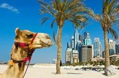 Emirados Árabes Unidos tornam-se o maior colaborador mundial em vendas de tokens