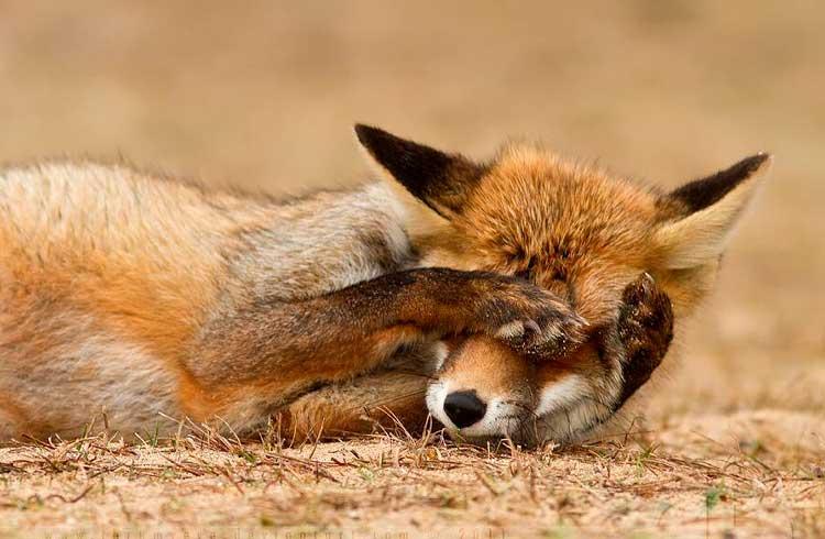 FoxBit terá que pagar mais de R$10 mil a cliente devido decisão judicial