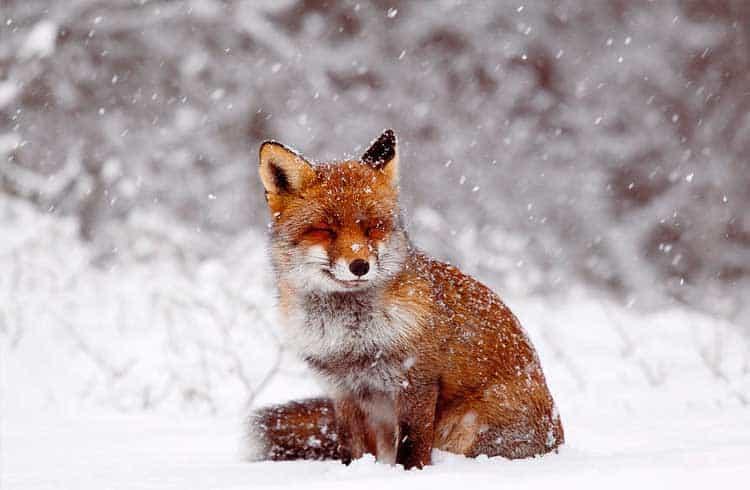 FoxBit fica com saques e depósitos de criptomoedas indisponível