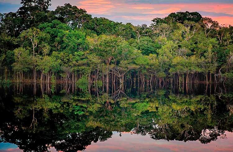 Brasil pode arrecadar R$35 bilhões com o fim do desmatamento da Amazônia