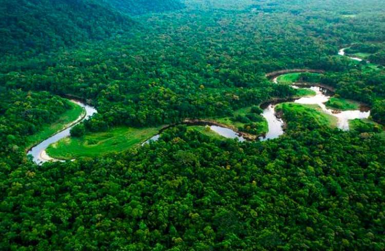 Cripto HODLer: a Floresta Amazônica precisa de você