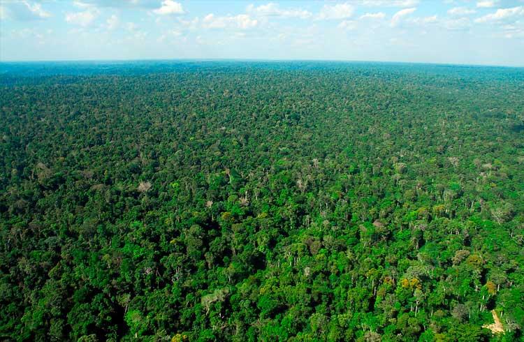 Doações para Amazônia serão registradas em blockchain por meio de parceria com a IBM
