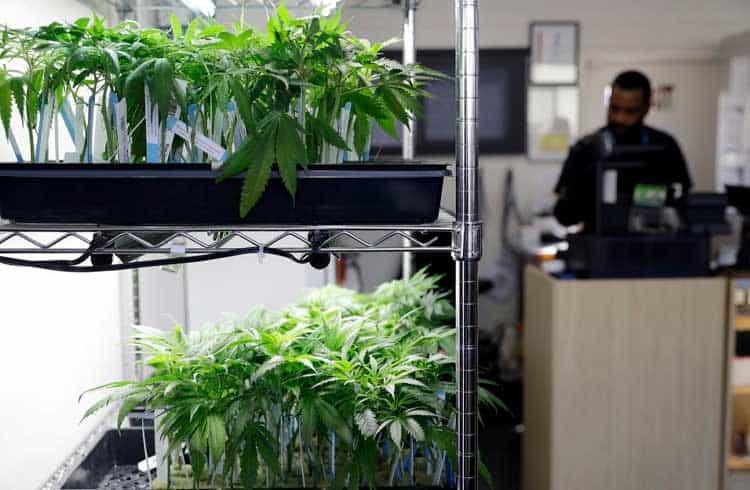 Membro da prefeitura de Berkeley na Califórnia usa Bitcoin Cash para comprar cannabis