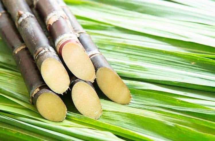 Embrapa utilizará tecnologia blockchain no abastecimento de cana-de-açúcar