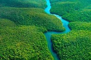 CoinPayments anuncia parceria com Rainforest em ação na Floresta Amazônica