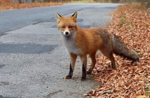 Foxbit conquista importante selo de atendimento ao cliente
