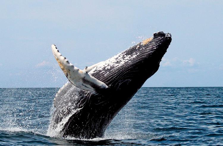 Baleias de Ethereum crescem durante queda no preço