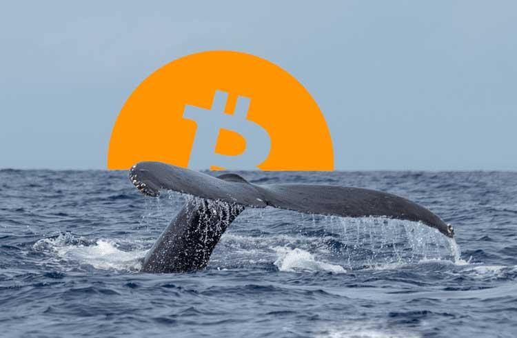 Baleias planejam correção do Bitcoin para comprar mais barato, alerta trader