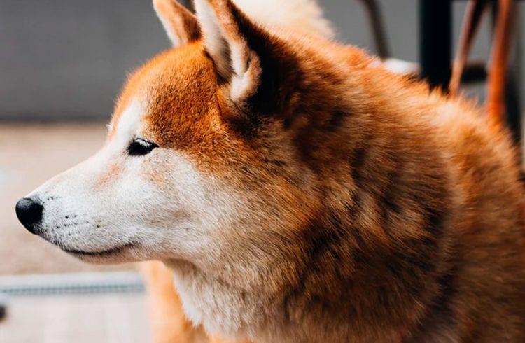 Dogecoin dispara 150% após pump do grupo que impulsionou a GameStop