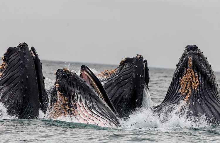 Baleias lucram até 5.000% negociando NFTs, revela pesquisa