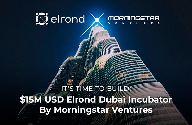 Morning Star Vetures ira investir US$ 15 milhões em projetos baseados em Elrond